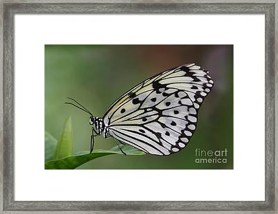 Come Sit With A Paper Kite Framed Print by Ruth Jolly