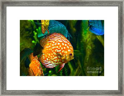Come Swim With Us  Framed Print