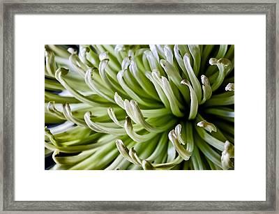 Come To Mum Framed Print by Christi Kraft