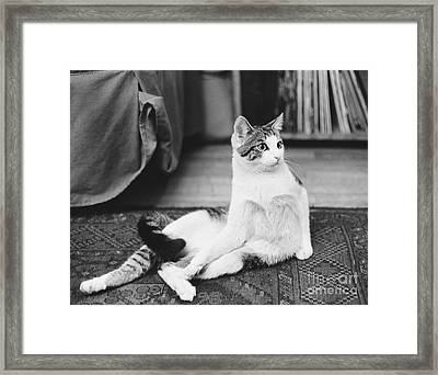 Come Up And See Me Sometime Framed Print by Suzanne Szasz
