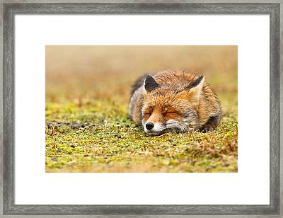 Comfortably Fox Framed Print by Roeselien Raimond