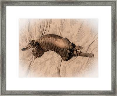 Comfy Cat Framed Print by Christy Usilton
