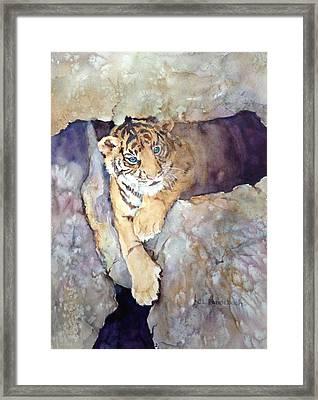 Tiger Cub Framed Print