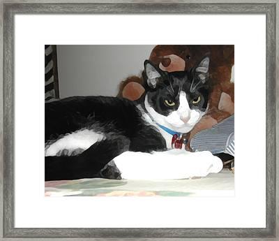 Comfy Kitty Framed Print by Jeanne A Martin