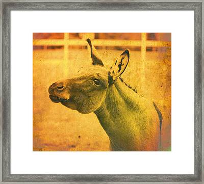 Comical Donkey Framed Print