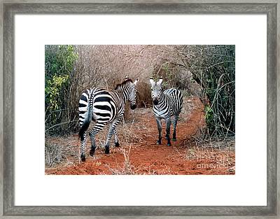 Coming And Going Framed Print by Phyllis Kaltenbach