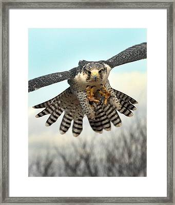 Coming At Cha Framed Print by Danny Pickens