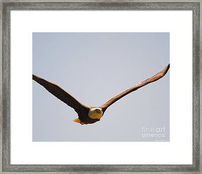 Coming At You Framed Print by Jai Johnson