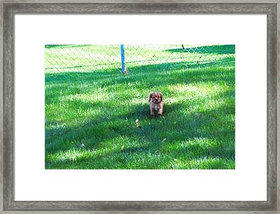 Coming Framed Print by Barb Baker