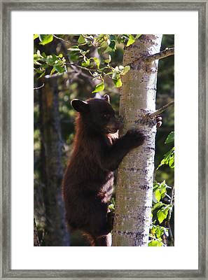 Coming Down Framed Print by Mark Kiver