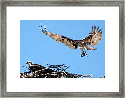 Coming Home Framed Print by Erin Shipley