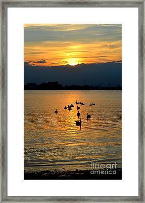 Coming Home Framed Print by Janet Davaros