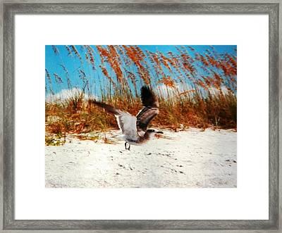 Windy Seagull Landing Framed Print