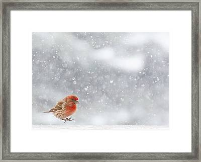 Coming In For A Landing Framed Print by Diane Alexander