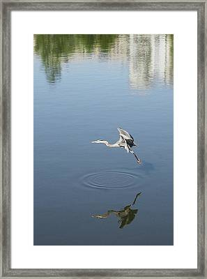 Framed Print featuring the photograph Coming In For A Landing by Ellen O'Reilly