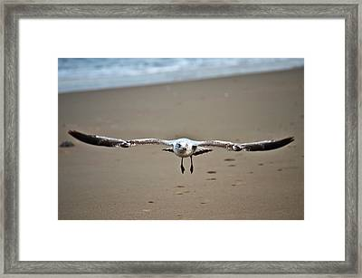 Coming In For A Landing  Framed Print by Sabrina  Hall