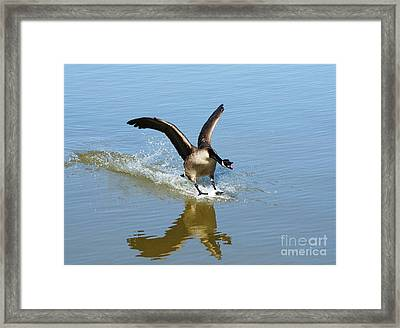 Coming In For A Landing Framed Print by Vivian Christopher