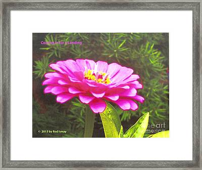 Coming In For A Landing   Warm Pink Framed Print