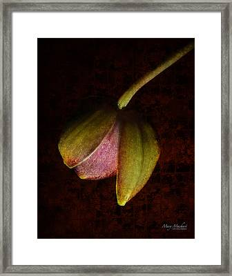 Coming Out Framed Print by Mary Machare