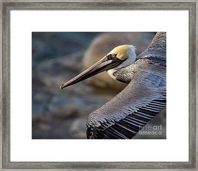 Framed Print featuring the photograph Coming Through by Dale Nelson