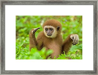 Coming To Terms Framed Print by Ashley Vincent