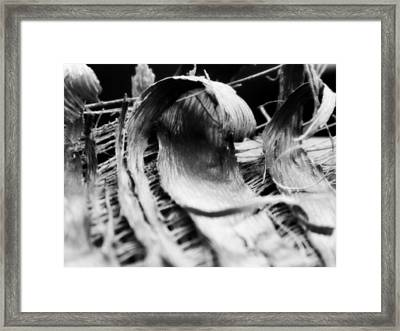 Coming Undone Framed Print by Tara Miller