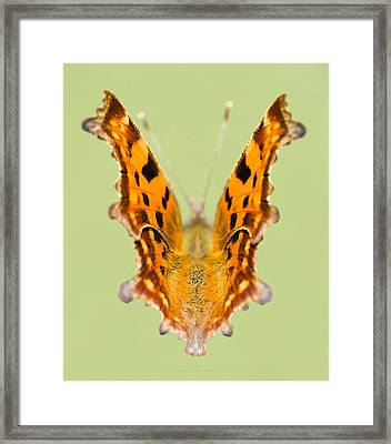 Comma Butterfly Framed Print