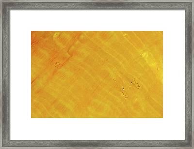 Commensal Shrimp Framed Print