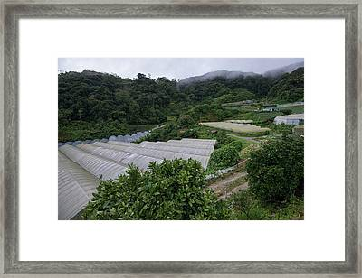 Commercial Crops Surrounded By Forest Framed Print by Scubazoo