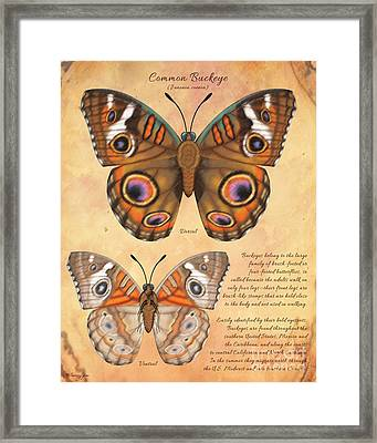 Common Buckeye Butterfly  Framed Print by Tammy Yee