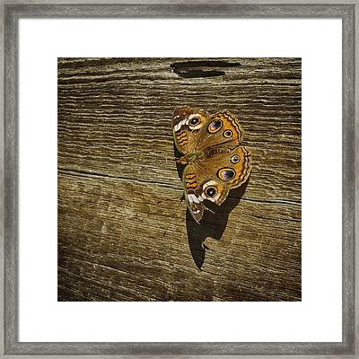 Common Buckeye With Torn Wing Framed Print by Lynn Palmer