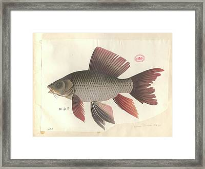 Common Carp Framed Print by Natural History Museum, London