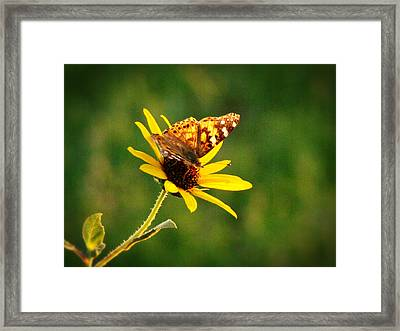 Common Daisy Framed Print by Beverly Guilliams