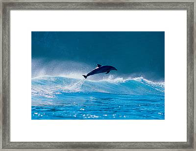 Common Dolphin Breaching In The Sea Framed Print
