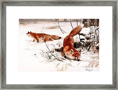 Common Fox In The Snow Framed Print by Friedrich Wilhelm Kuhnert