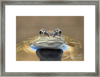 Common Frog In A Pond Framed Print by Simon Booth
