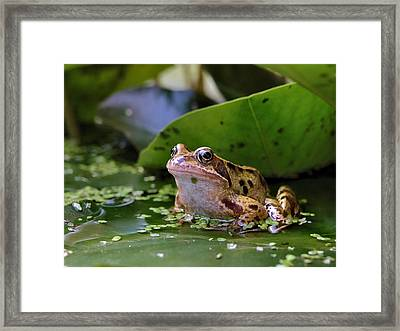 Framed Print featuring the digital art Common Frog by Ron Harpham