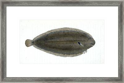 Common Gar-fish, Esox Belone, 1804, British Fishes Framed Print
