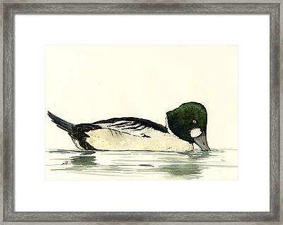 Common Goldeneye Duck Framed Print by Juan  Bosco