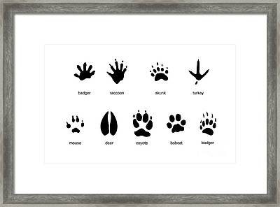 Common Mammal Animal Tracks Framed Print