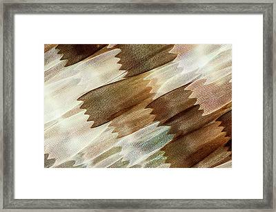 Common Mother-of-pearl Butterfly Wing Framed Print by Gerd Guenther