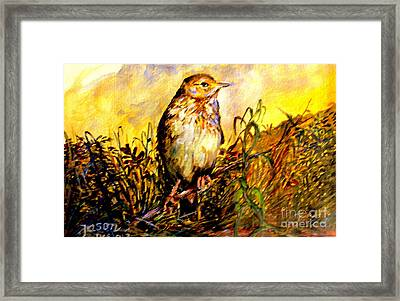 Common Pipit Framed Print