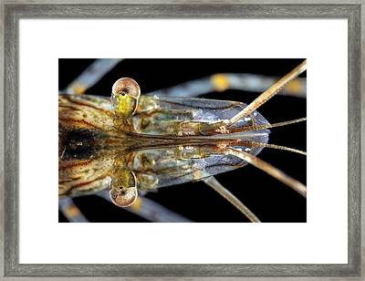 Common Prawn Head Framed Print