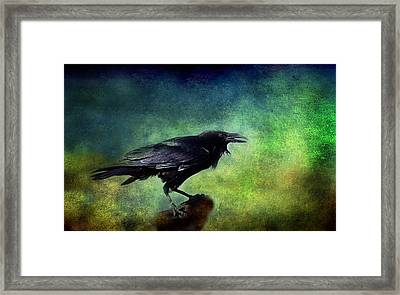 Common Raven Framed Print