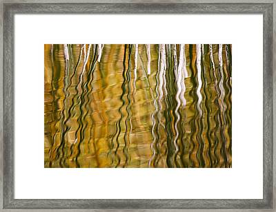 Common Reed Reflecting In Water Framed Print