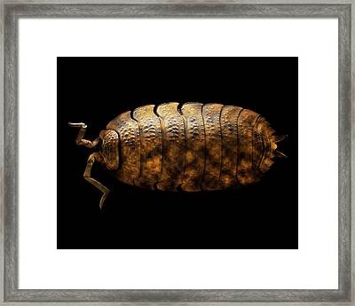 Common Rough Woodlouse Framed Print