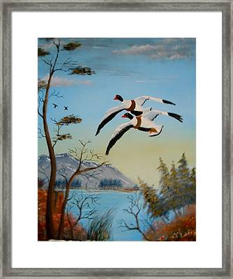 Framed Print featuring the painting Common Shelducks by Al  Johannessen