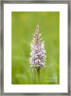 Common Spotted Framed Print by Anne Gilbert