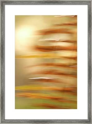 Common Sword Ferns, Polystichum Framed Print by Phil Schermeister