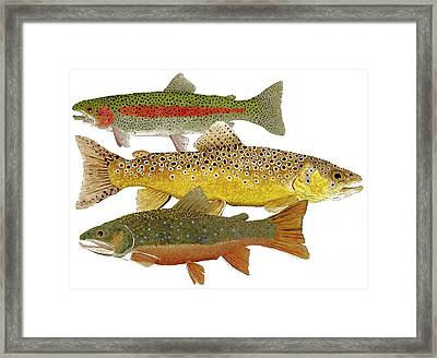 Framed Print featuring the painting Common Trout  Rainbow Brown And Brook by Thom Glace